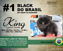 Black Pom n° 1 do Brasil